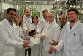 Consortium for Sustainable Packaging Project powers ahead – another use for Miscanthus.