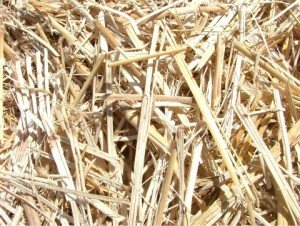 Image of chopped Giant Miscanthus Giganteus cane