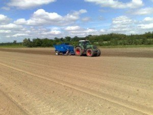 Image of Miscanthus being planted