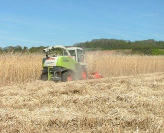 Funding for Miscanthus expansion – Repreve Renewables