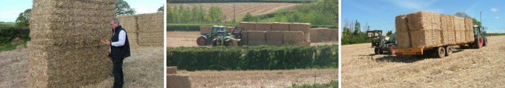 Images of Miscanthus bales