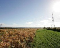 Mike's Miscanthus Report – Nov '15