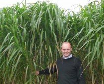 Miscanthus Could Offer Viable Alternative to Coal